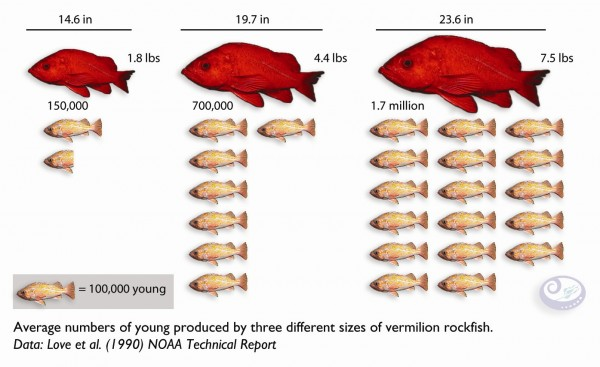Larger Fish Produce More Fish