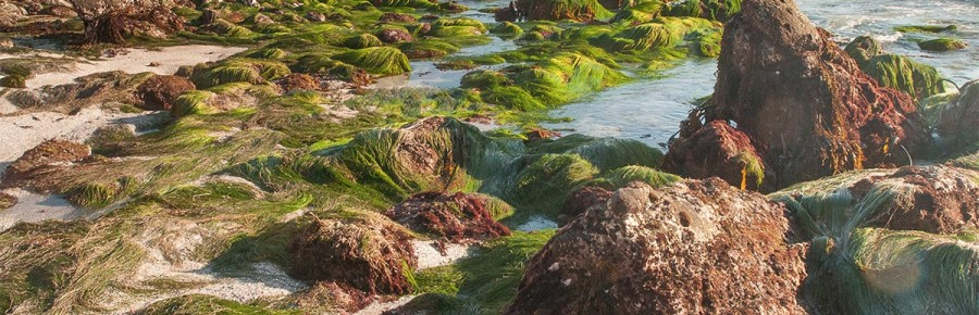 First Place: King Tide and Sea Grass by Ron Chilcote