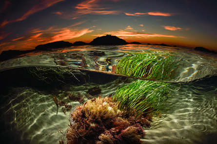 Second Place: Sean Brown - Tide Pool